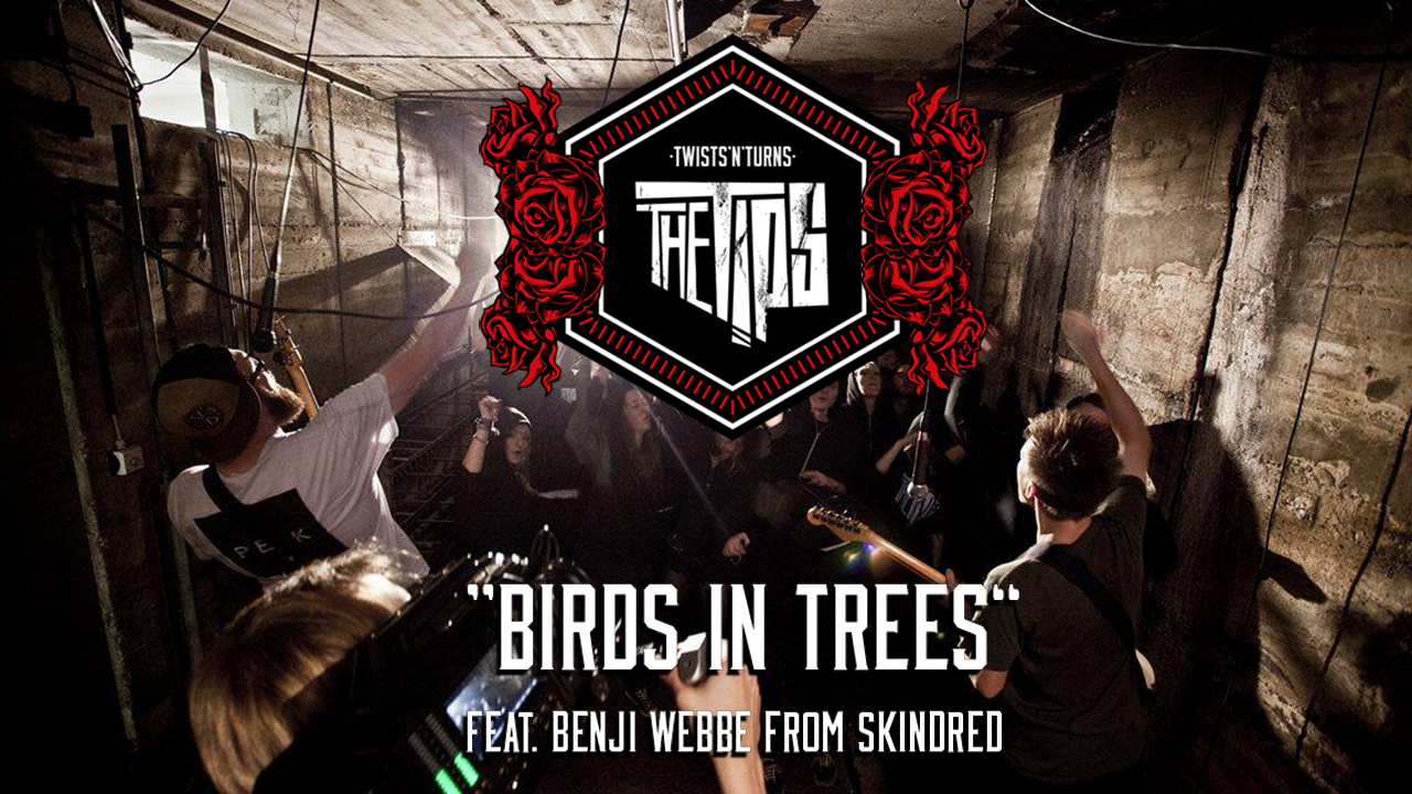 New Video – BIRDS IN TREES
